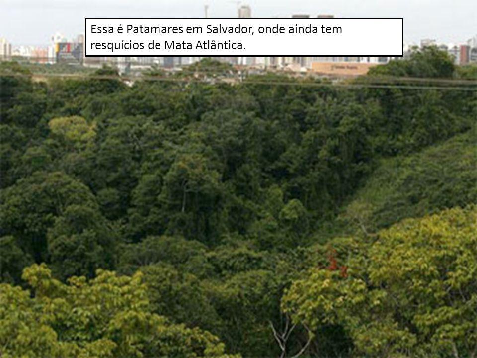 Essa é Patamares em Salvador, onde ainda tem resquícios de Mata Atlântica.