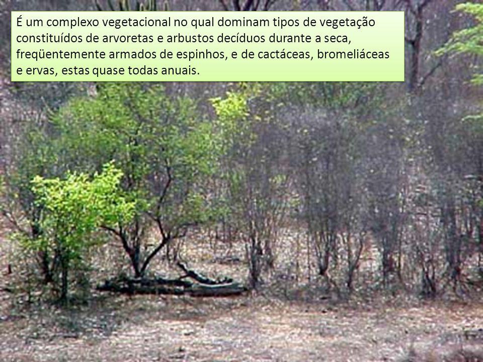 É um complexo vegetacional no qual dominam tipos de vegetação constituídos de arvoretas e arbustos decíduos durante a seca, freqüentemente armados de espinhos, e de cactáceas, bromeliáceas e ervas, estas quase todas anuais.