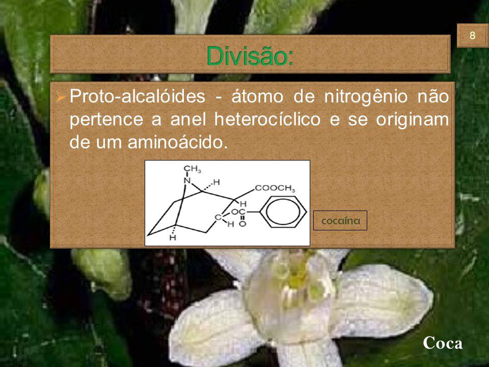 Divisão: Proto-alcalóides - átomo de nitrogênio não pertence a anel heterocíclico e se originam de um aminoácido.