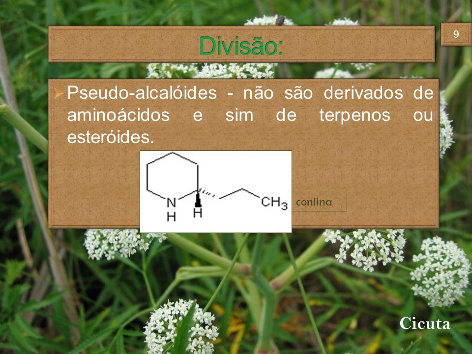 Divisão: Pseudo-alcalóides - não são derivados de aminoácidos e sim de terpenos ou esteróides. coniina.
