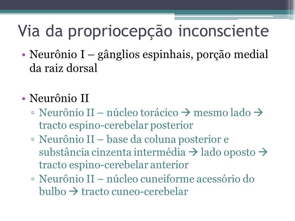 Via da propriocepção inconsciente