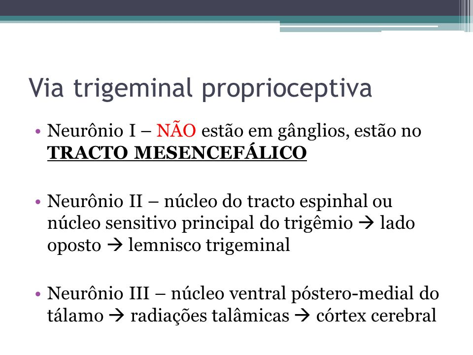 Via trigeminal proprioceptiva
