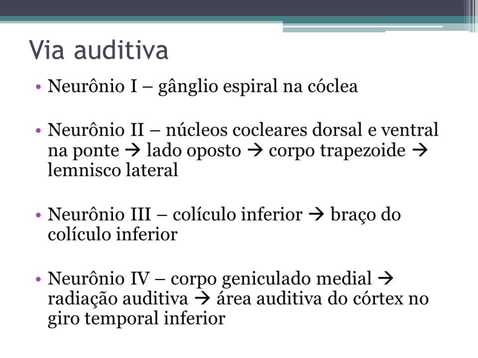 Via auditiva Neurônio I – gânglio espiral na cóclea
