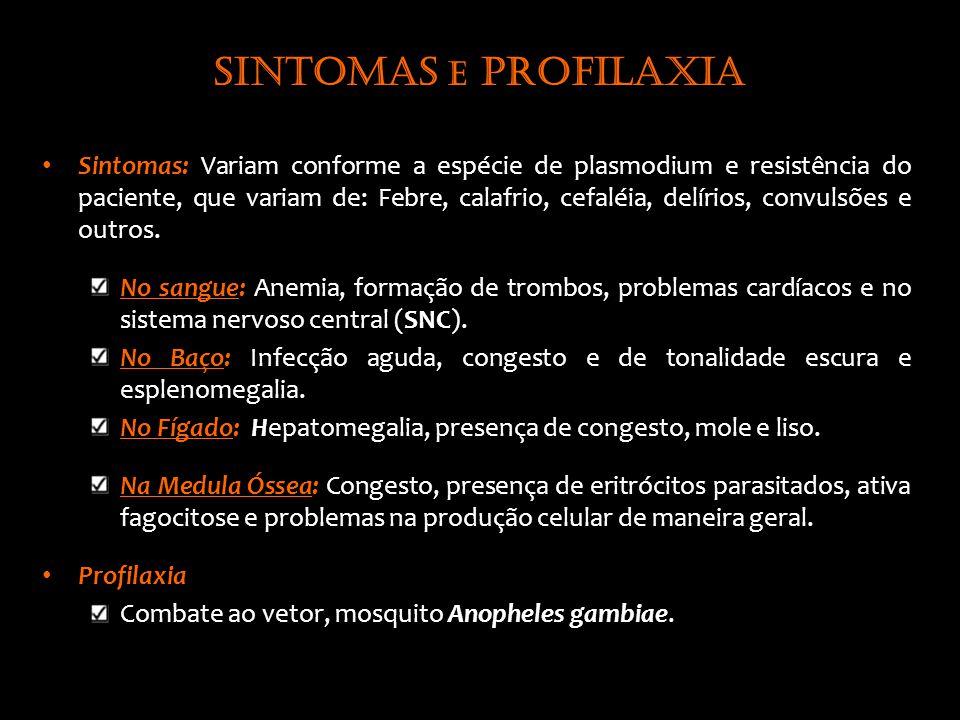 Sintomas e profilaxia