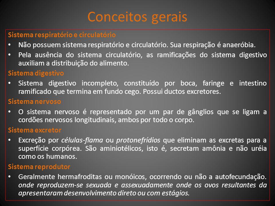Conceitos gerais Sistema respiratório e circulatório