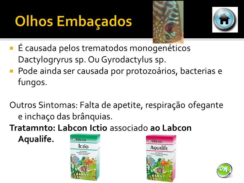 Olhos Embaçados É causada pelos trematodos monogenéticos Dactylogryrus sp. Ou Gyrodactylus sp.