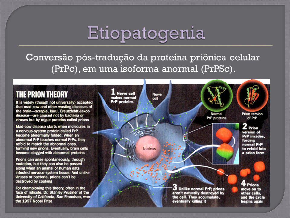 Etiopatogenia Conversão pós-tradução da proteína priônica celular (PrPc), em uma isoforma anormal (PrPSc).