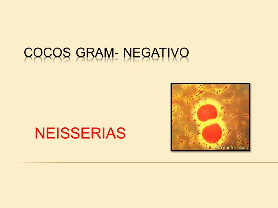 COCOS GRAM- NEGATIVO NEISSERIAS