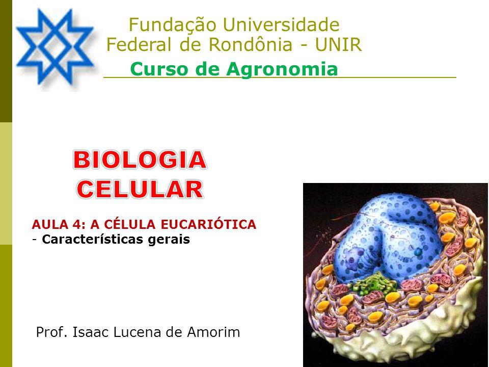 Fundação Universidade Federal de Rondônia - UNIR
