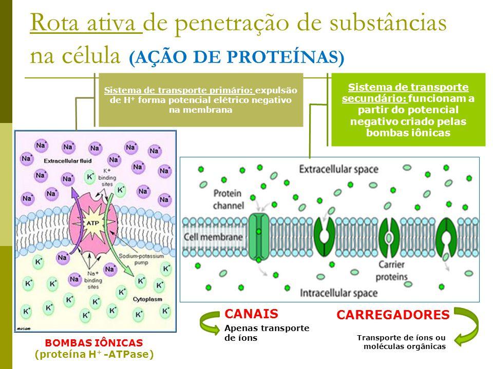 Rota ativa de penetração de substâncias na célula (AÇÃO DE PROTEÍNAS)