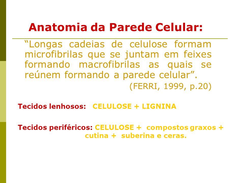 Anatomia da Parede Celular: