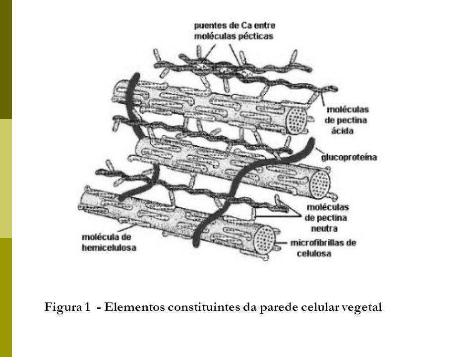 Figura 1 - Elementos constituintes da parede celular vegetal