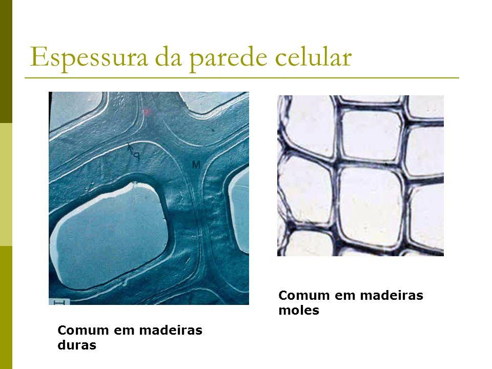 Espessura da parede celular