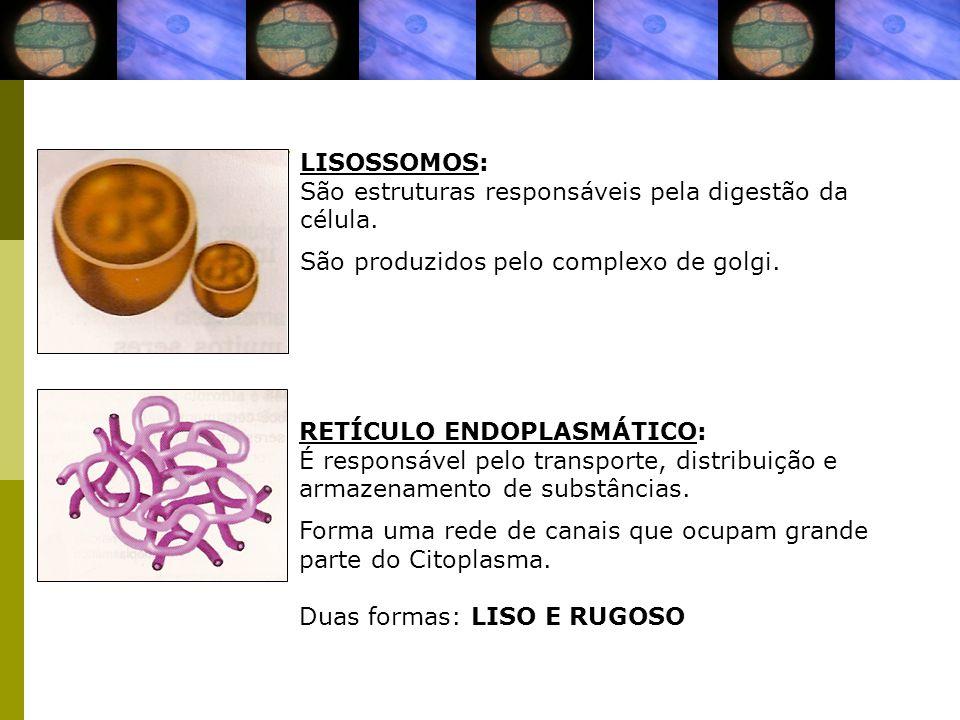 LISOSSOMOS: São estruturas responsáveis pela digestão da célula. São produzidos pelo complexo de golgi.