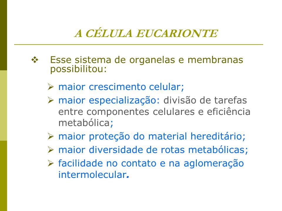 A CÉLULA EUCARIONTE Esse sistema de organelas e membranas possibilitou: maior crescimento celular;