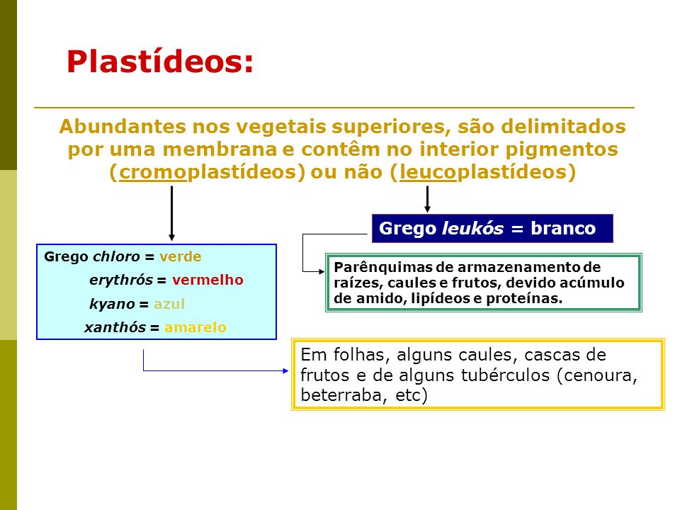 Plastídeos:
