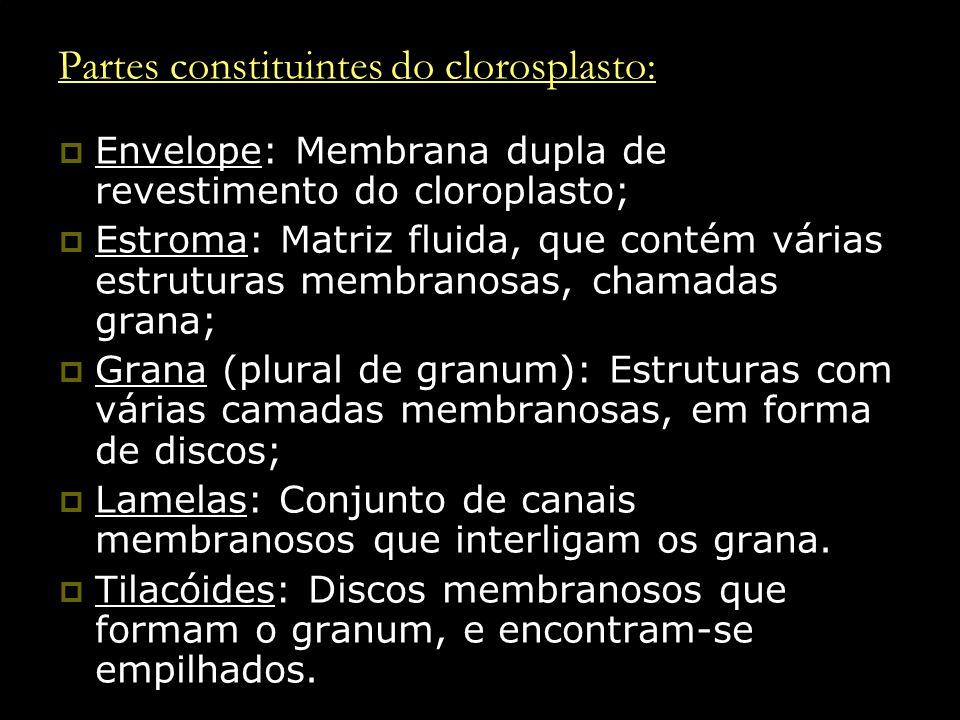 Partes constituintes do clorosplasto: