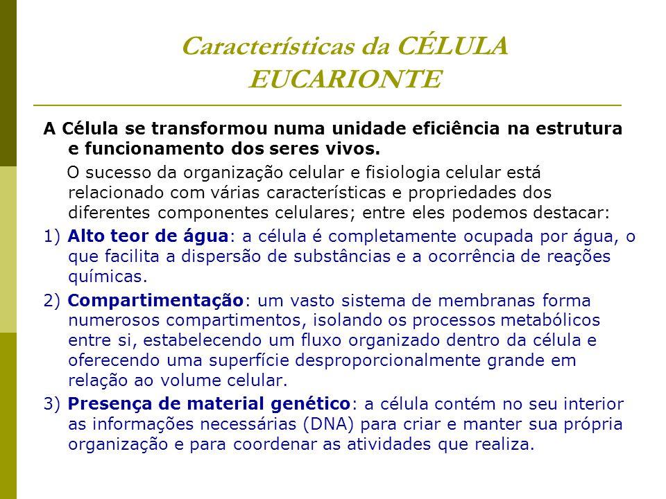 Características da CÉLULA EUCARIONTE