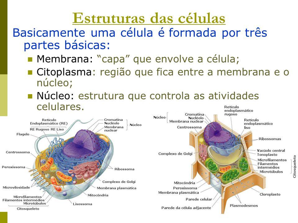 Estruturas das células