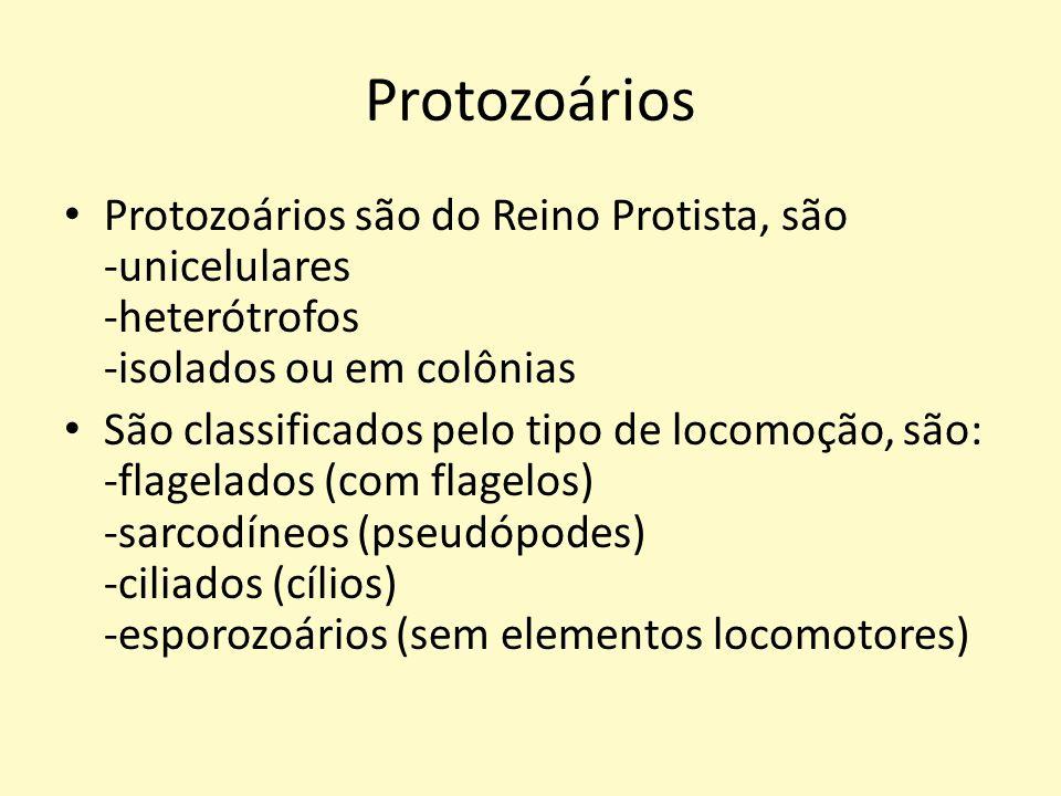 Protozoários Protozoários são do Reino Protista, são -unicelulares -heterótrofos -isolados ou em colônias.