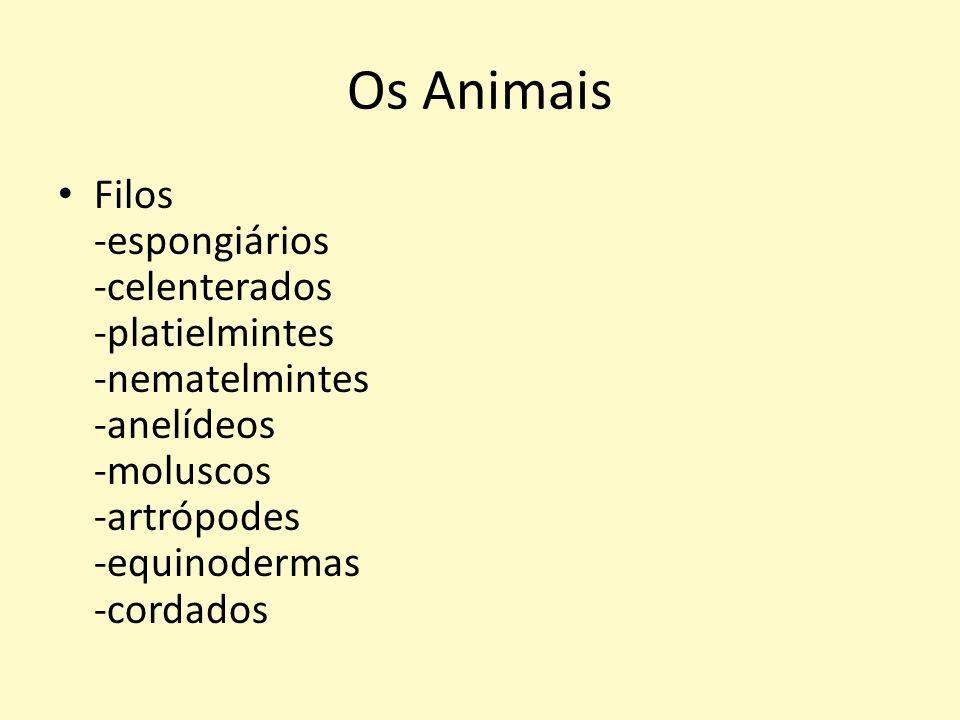 Os Animais Filos -espongiários -celenterados -platielmintes -nematelmintes -anelídeos -moluscos -artrópodes -equinodermas -cordados.