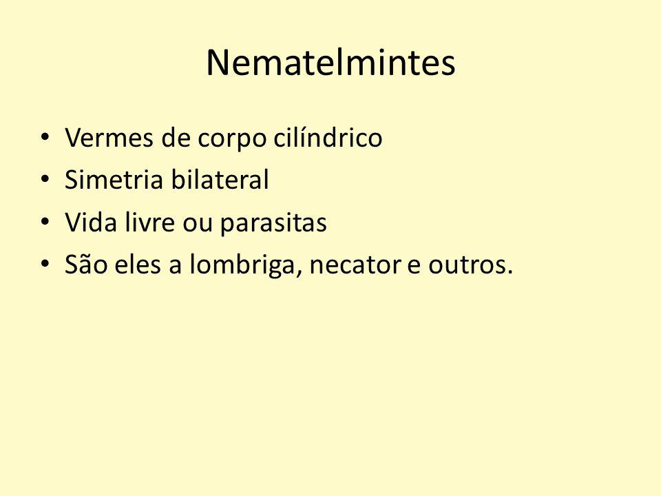 Nematelmintes Vermes de corpo cilíndrico Simetria bilateral
