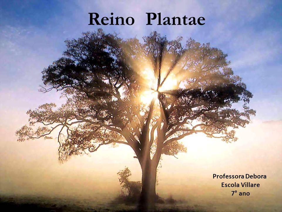 Reino Plantae Professora Debora Escola Villare 7° ano