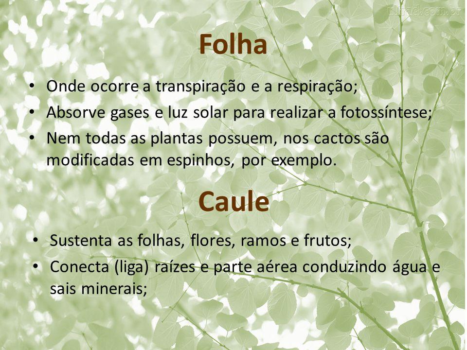 Folha Caule Onde ocorre a transpiração e a respiração;