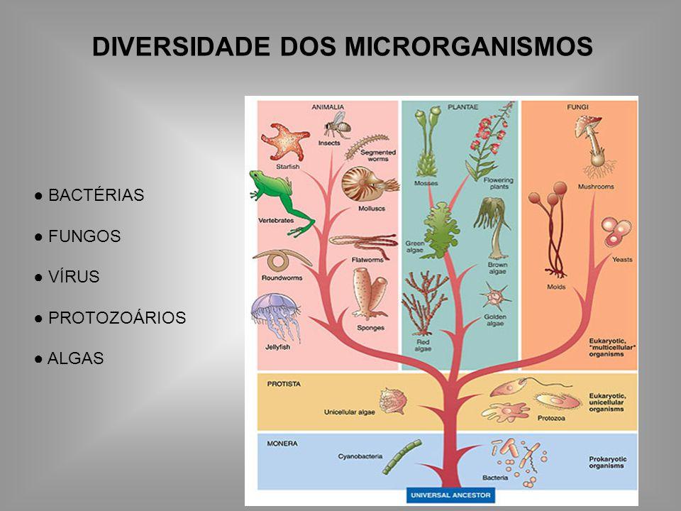 DIVERSIDADE DOS MICRORGANISMOS