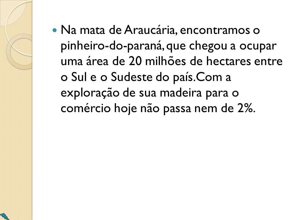 Na mata de Araucária, encontramos o pinheiro-do-paraná, que chegou a ocupar uma área de 20 milhões de hectares entre o Sul e o Sudeste do país.Com a exploração de sua madeira para o comércio hoje não passa nem de 2%.