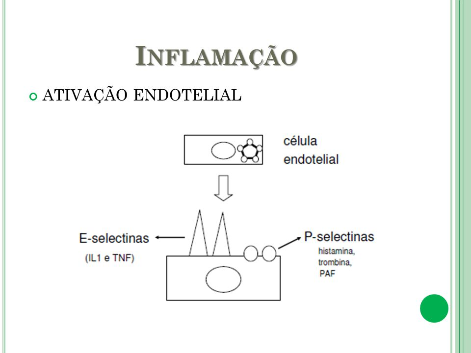Inflamação ATIVAÇÃO ENDOTELIAL