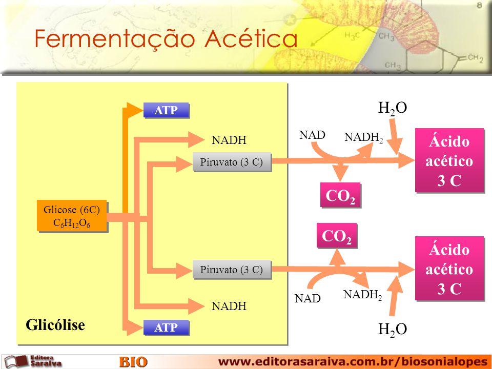 Fermentação Acética CO2 Ácido acético 3 C Glicólise H2O NADH2 NAD NADH