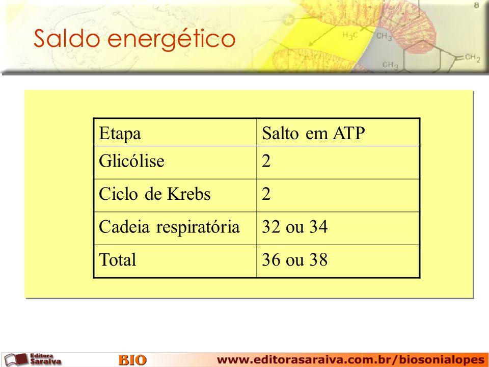 Saldo energético Etapa Salto em ATP Glicólise 2 Ciclo de Krebs