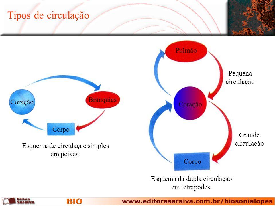 Tipos de circulação Pulmão Pequena circulação Brânquias Coração