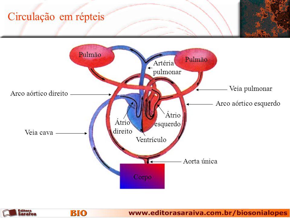 Circulação em répteis Pulmão Pulmão Artéria pulmonar Veia pulmonar