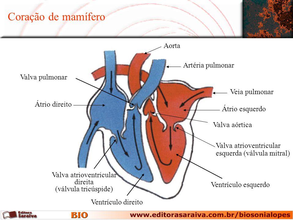 Valva atrioventricular