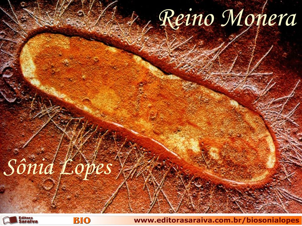 Reino Monera Sônia Lopes