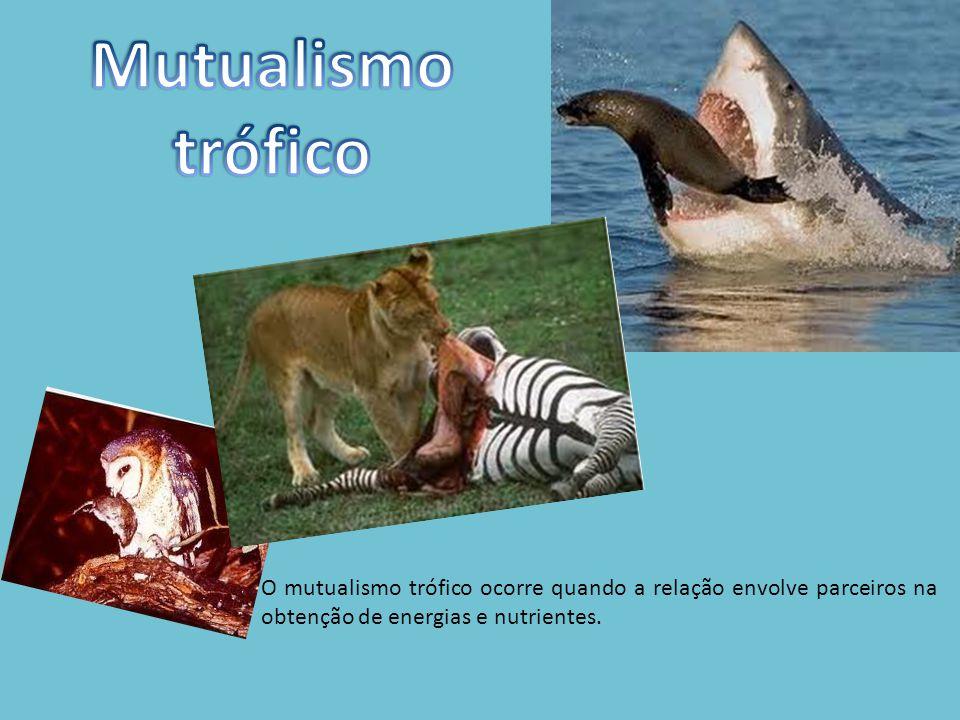 Mutualismo trófico O mutualismo trófico ocorre quando a relação envolve parceiros na obtenção de energias e nutrientes.