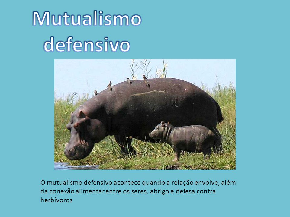 Mutualismo defensivo