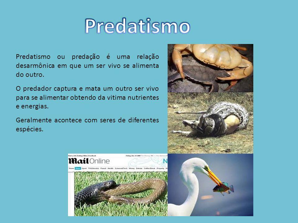 Predatismo Predatismo ou predação é uma relação desarmônica em que um ser vivo se alimenta do outro.