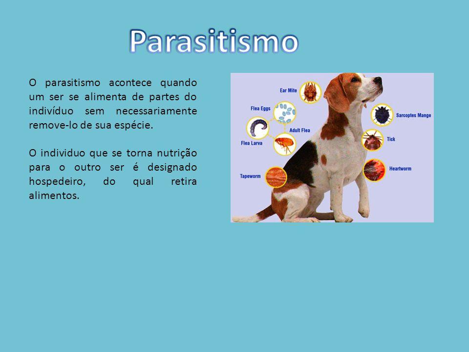 Parasitismo O parasitismo acontece quando um ser se alimenta de partes do indivíduo sem necessariamente remove-lo de sua espécie.