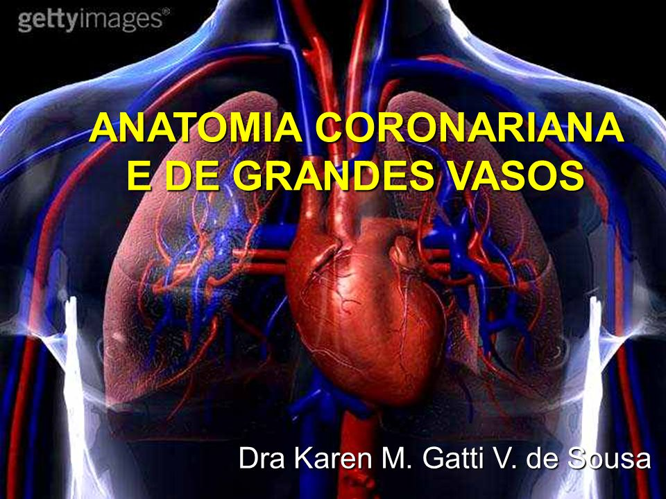 Vistoso Planum Sphenoidale Anatomía Viñeta - Imágenes de Anatomía ...