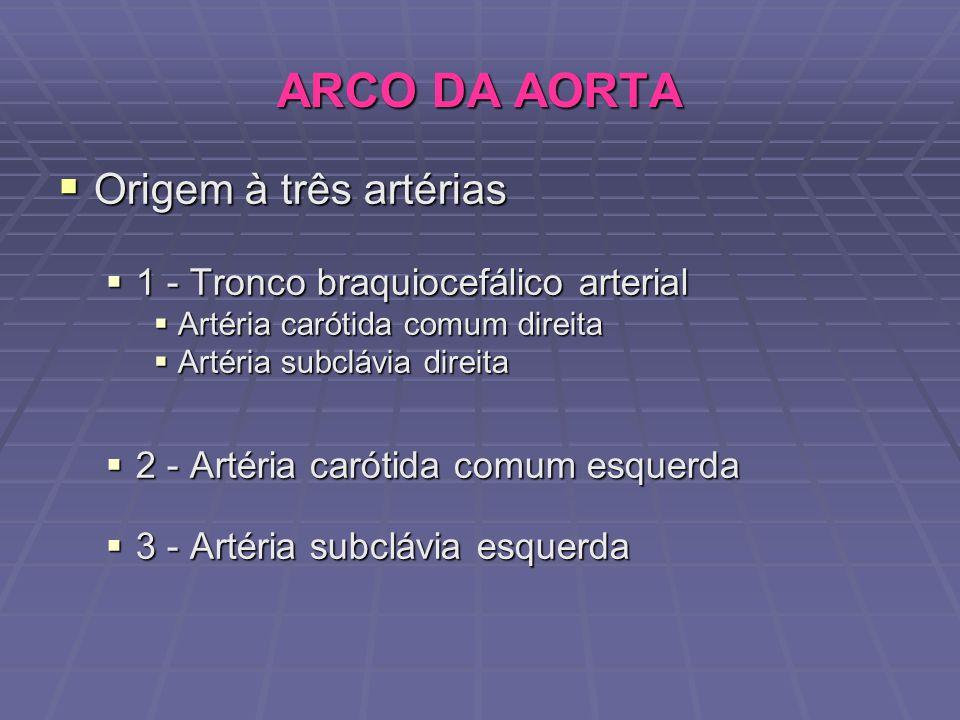 ARCO DA AORTA Origem à três artérias