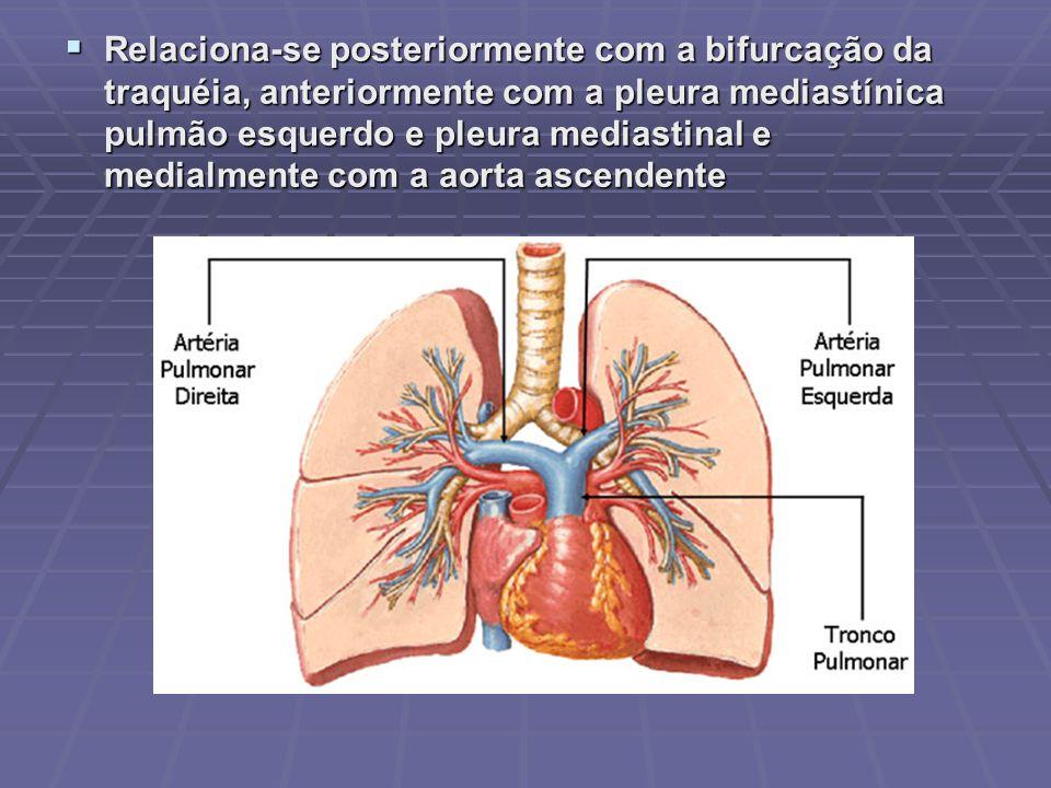 Relaciona-se posteriormente com a bifurcação da traquéia, anteriormente com a pleura mediastínica pulmão esquerdo e pleura mediastinal e medialmente com a aorta ascendente