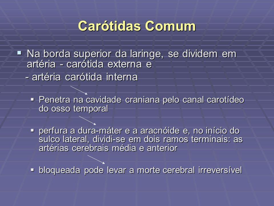 Carótidas Comum Na borda superior da laringe, se dividem em artéria - carótida externa e. - artéria carótida interna.