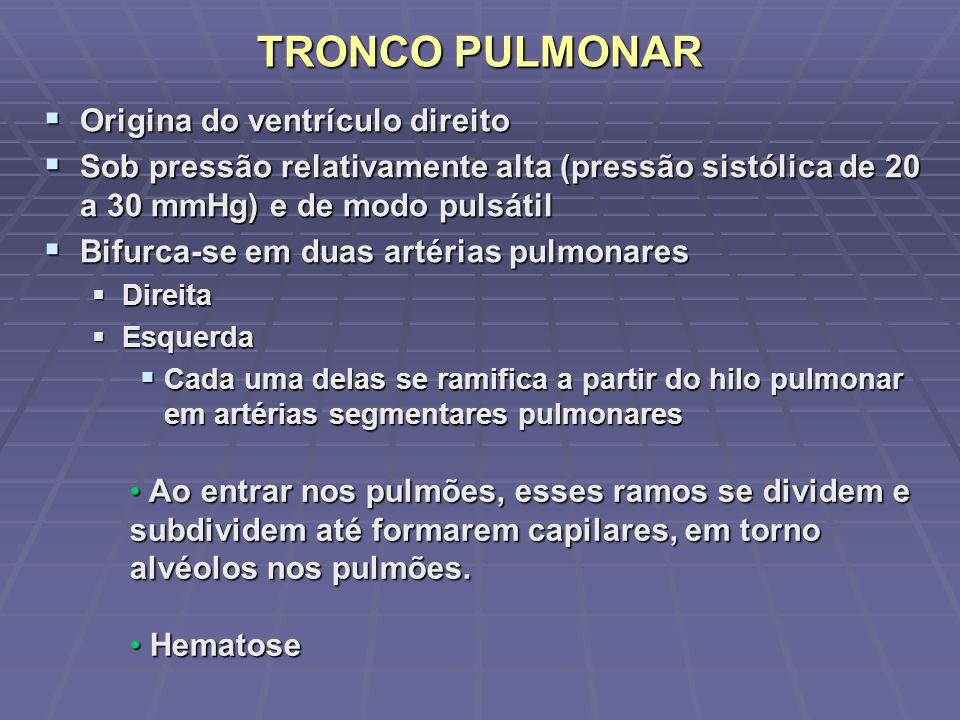 TRONCO PULMONAR Origina do ventrículo direito