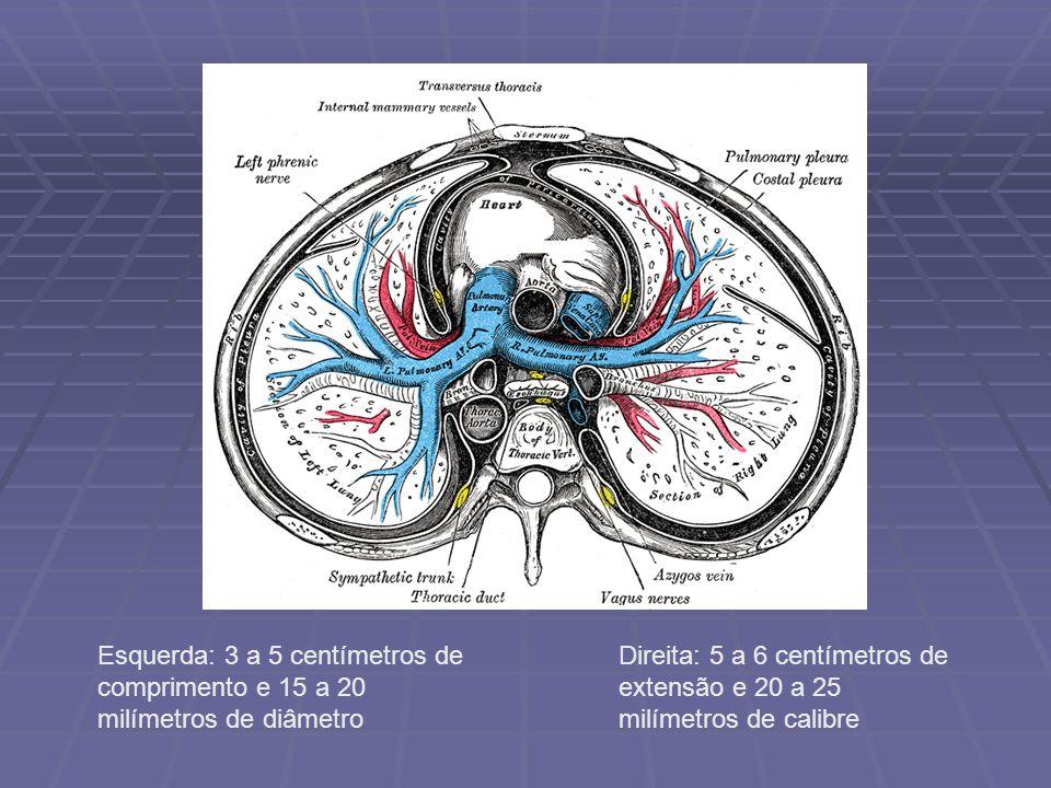 Esquerda: 3 a 5 centímetros de comprimento e 15 a 20 milímetros de diâmetro