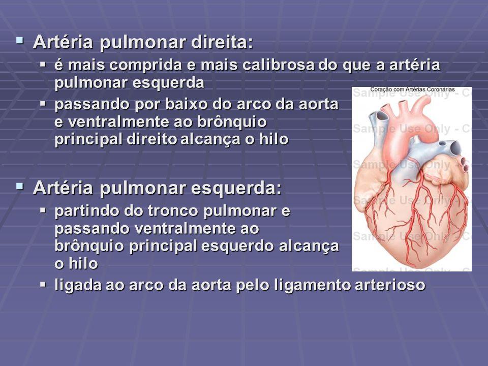 Artéria pulmonar direita: