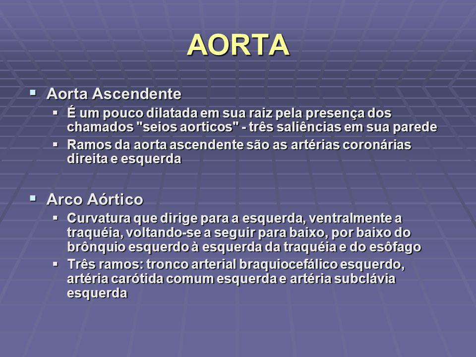 AORTA Aorta Ascendente Arco Aórtico