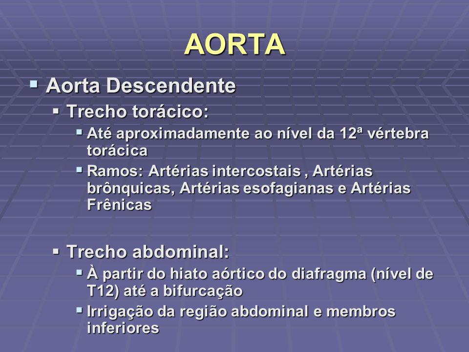 AORTA Aorta Descendente Trecho torácico: Trecho abdominal: